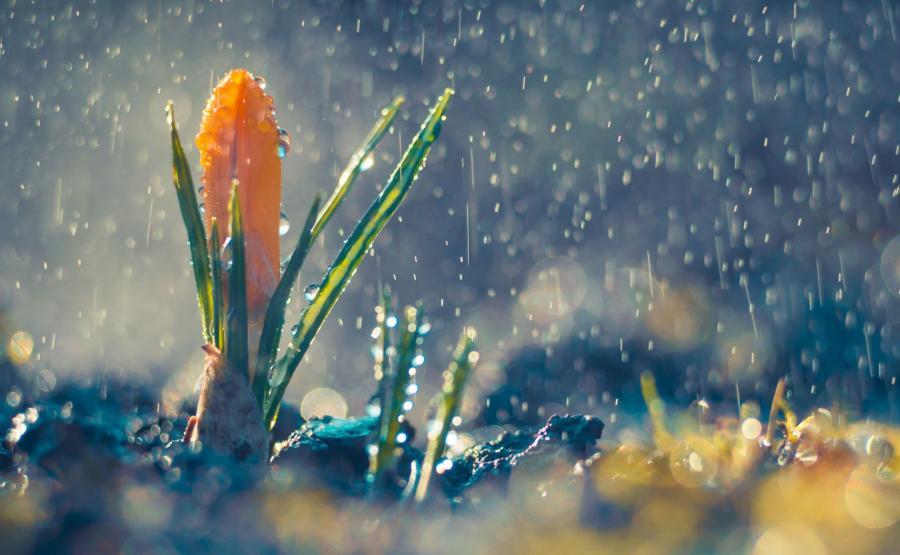 Deszcz wiosną