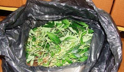 Policja zlikwidowała pięć plantacji marihuany