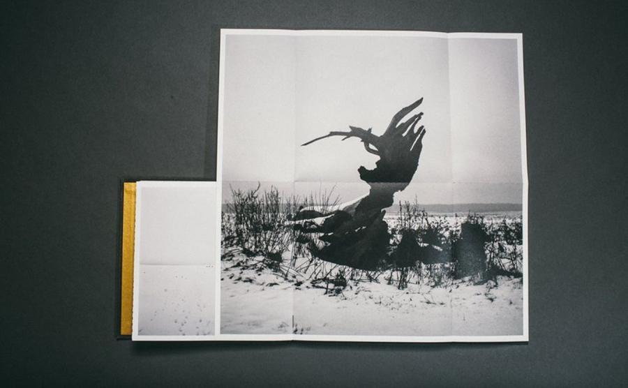 Zdjęcie z albumu \