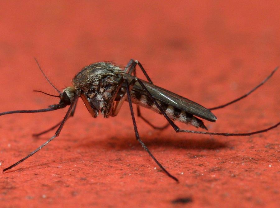 Przełom w walce z komarami. Wypędzimy je na dobre