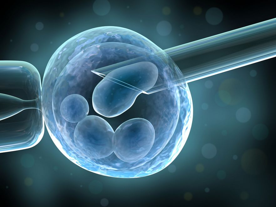 Bundestag dopuszcza testy na embrionach