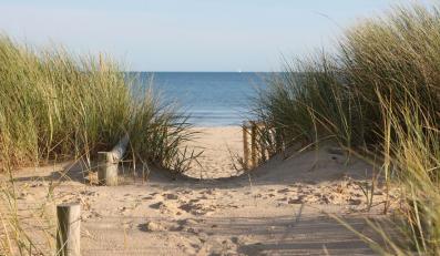 Sinice w Bałtyku. Zagrożony Zalew Szczeciński