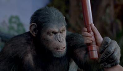 Małpy wciąż rządzą w Ameryce