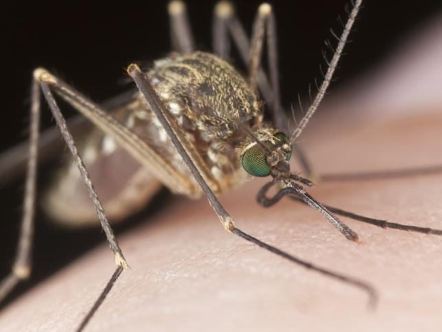 Naturalne sposoby na ukąszenia komara