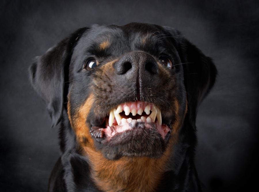 Obowiązkowy czip dla każdego psa?