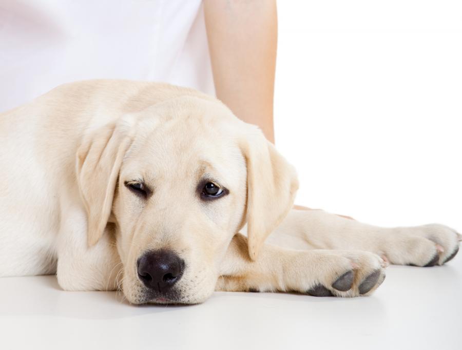 Zabawa z psem wspomaga rehabiltację