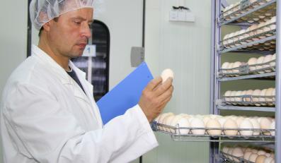Kontrola jajek, zdjęcie ilustracyjne