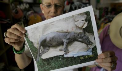Chupacabra? Mieszkanka Texasu jest przekonana, że uwieczniła na fotografii martwą bestię