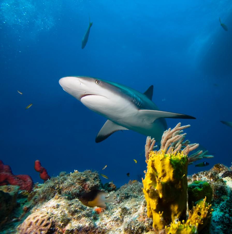 Zdjęcia: 10 Najpiękniejszych Wysp świata. Pojedziesz Tam