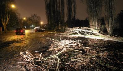 Drzewo powalone przez huragan Ksawery w Szczecinie