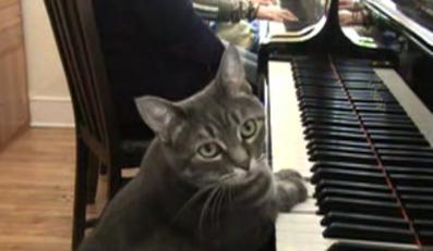 Zobacz kota, który gra na pianinie