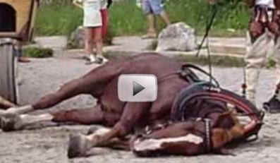 Wycieńczony koń padł pod Morskim Okiem