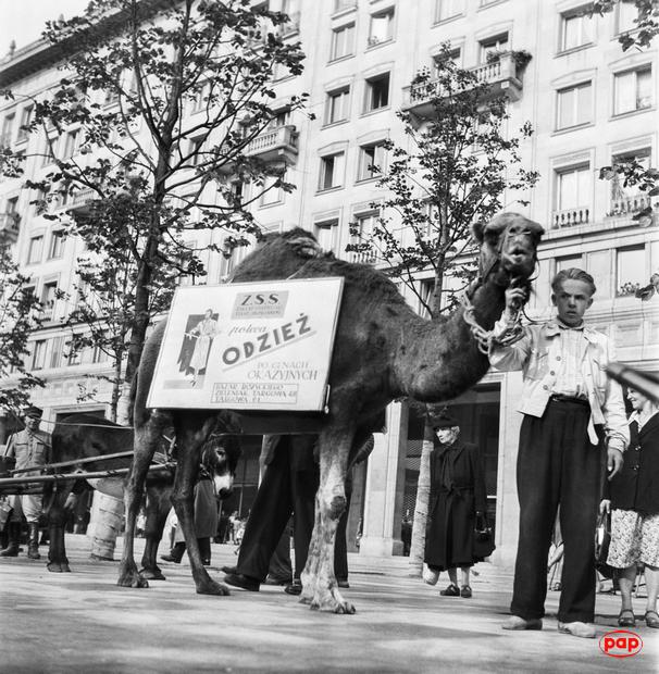 Wielbłąd na placu Konstytucji. Życie codzienne mieszkańców Warszawy w latach 1945-55 [ZDJĘCIA]